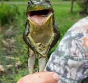 Real Michigan J. Frog