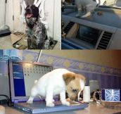 Everyone Keeps Blaming Cats But Dogs Can Be Jerks Too