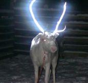 Clever Reindeer Antlers