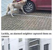 When Dogs Get Revenge