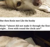 She Wasn't Going To Survive, But Then She Met This Husky