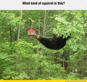 That's A Weird Squirrel