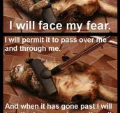 Cat Will Face All Fears