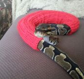 Fancy Snake