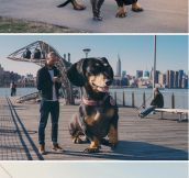Dog owner photoshops his dog into a giant