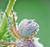 What Insects Look Like After The Rain