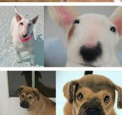 Dogs And Their Stuffed Animal Form