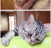 Luhu, The Saddest Cat In The World