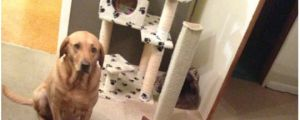 10 Dog Beds Stolen By Cats