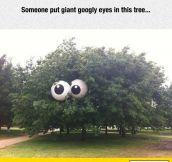 Googly Tree