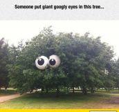 Googly Tree