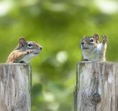 Two squirrels that look like debating politicians