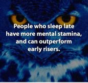 Fun Fact About Night Owls