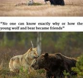 If a friggin wolf and bear and be friends can't humans be friends with humans?