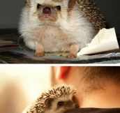 Hug A Hedgehog Today
