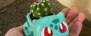 The Best Place For A Cactus