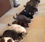 Kitty Cafe In Japan