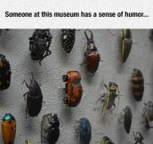 Beetle Exhibit