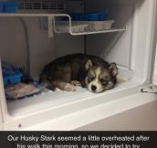 Now He Wants To Live In The Fridge