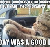 Every Cat's Successful Day