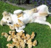 True Chick Magnet