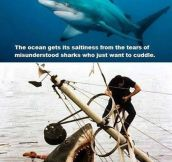 Oh, Poor Misunderstood Shark