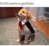 Puppy Potter
