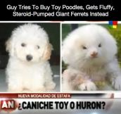 Be Careful When Buying A Dog