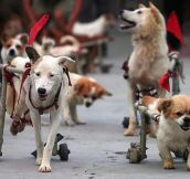 Disabled Dogs Annual Walk