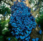 Magnificent Butterflies On A Tree