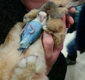 Bunny And Lovebird
