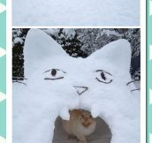 Cat Snow Fort
