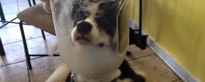Major Canine To Ground Control