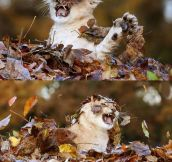 Just Some Kitty Playing In The Leaves
