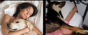 Sleeping With My Pets