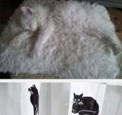 Cats Experts At Camouflage