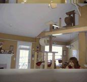 Crazy Cat Dad Renovates His House