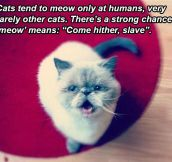 A Theory About Cats