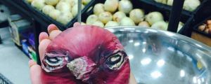 Angry Onion