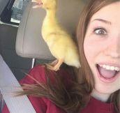 Duck's Duckface