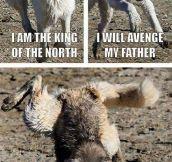 Dog Looking For Revenge