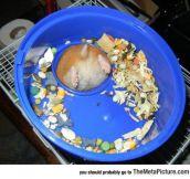 Hamster Problems