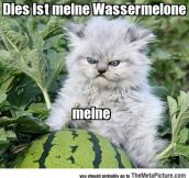 Don't Touch German Kitty's Watermelon