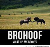 Sup Brony…