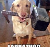 The Dog Of Thunder
