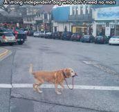 I Will Walk Myself, Thank You
