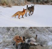 Fox And Dog Are Best Friends