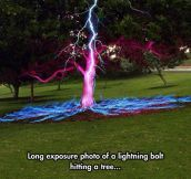 Lightning Hits A Tree