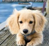 The Rare Golden Wiener
