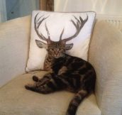 How Deer You Disturb The Cat?
